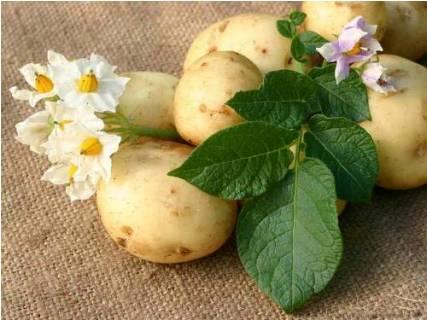Картофель для масок лица